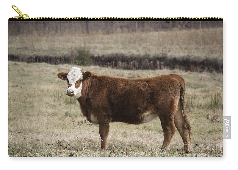 Cow Carry-all Pouch featuring the photograph Big Red by Teresa Mucha