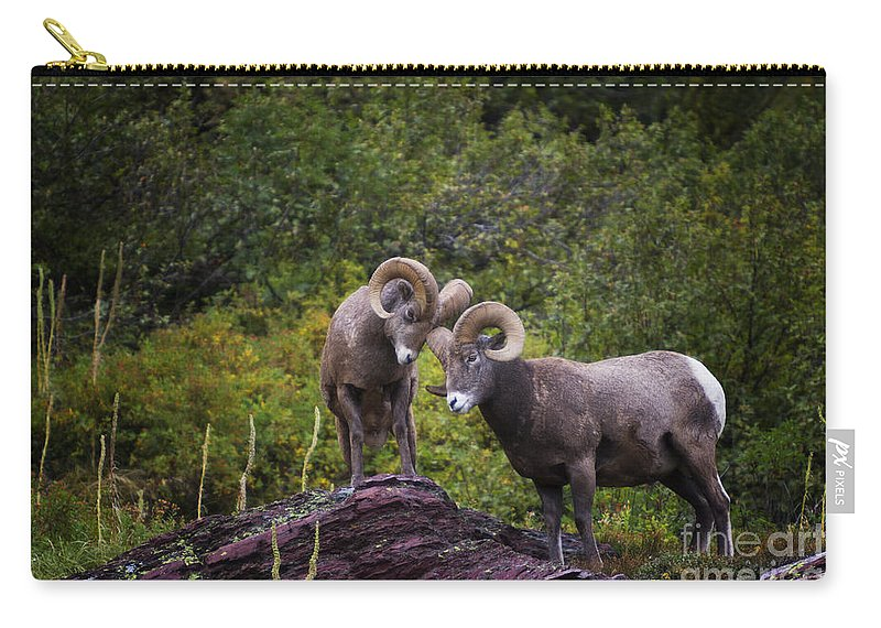 Autumn Carry-all Pouch featuring the photograph Bighorn Ram 4 by Mark Kiver