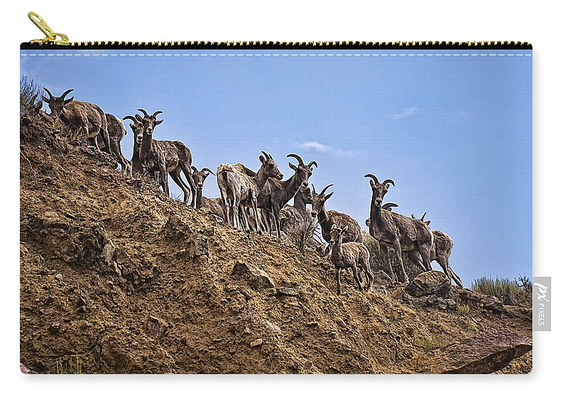 Bighorn Sheep Carry-all Pouch featuring the photograph Bighorn Sheep At Blue Mesa Reservoir by Priscilla Burgers