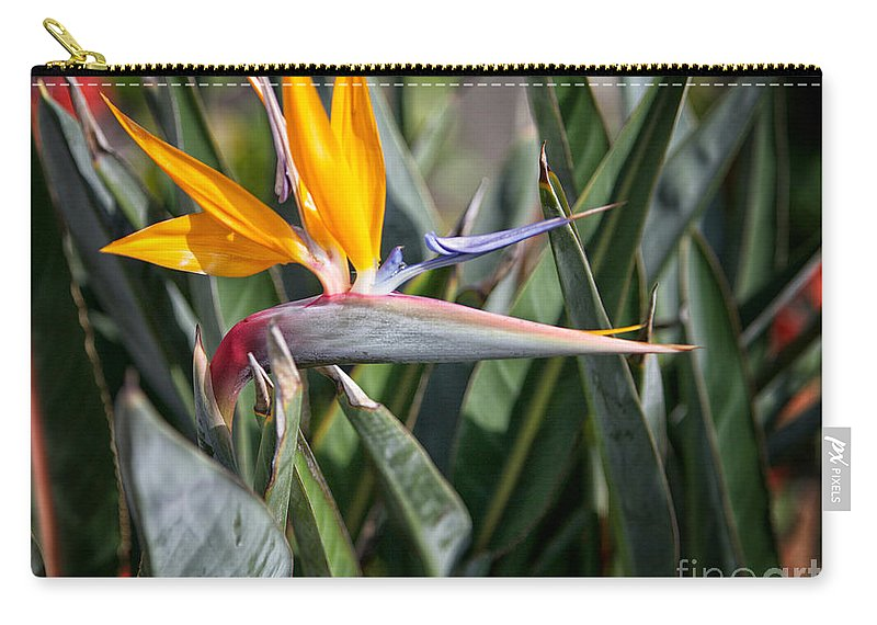 Bird Of Paradise Flower Carry-all Pouch featuring the photograph Bird Of Paradise by Erika Weber