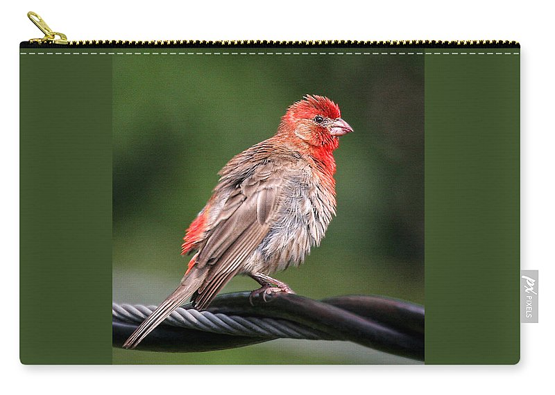 Birds Carry-all Pouch featuring the photograph High Wire Act by Geoff Crego