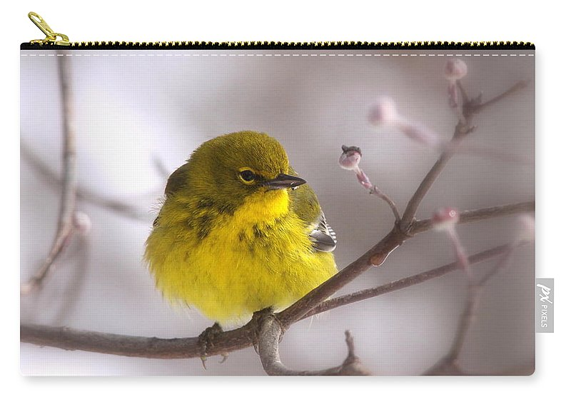 Pine Warbler Carry-all Pouch featuring the photograph Bird - Pine Warbler - Yellow Beauty by Travis Truelove