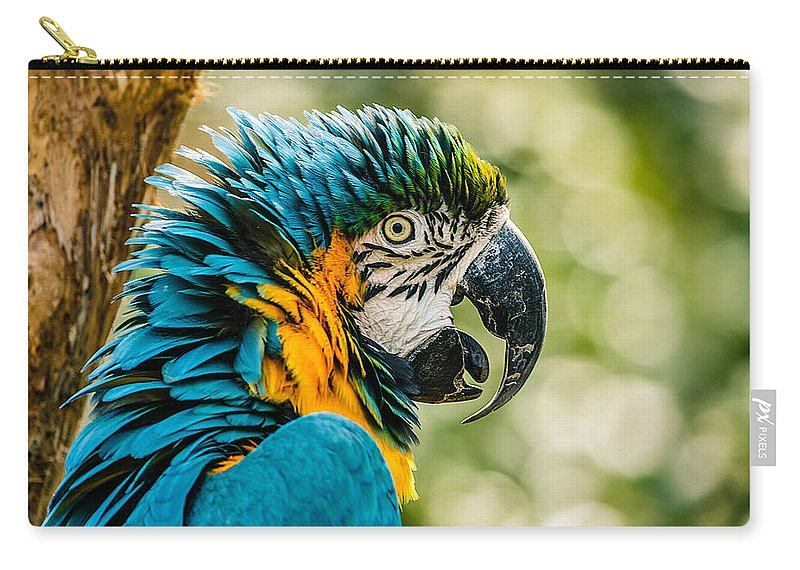 Blue-and-gold Macaw Carry-all Pouch featuring the photograph Birds Of A Feather by Chris Modlin