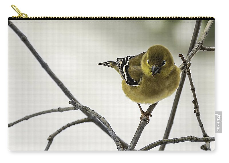 North America Carry-all Pouch featuring the photograph Birdy Birdy Goldfinch by LeeAnn McLaneGoetz McLaneGoetzStudioLLCcom