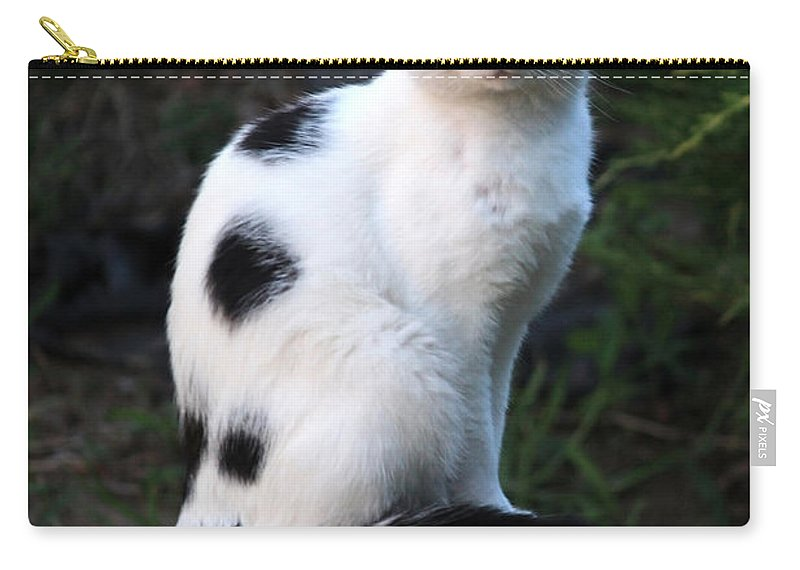 Cat Carry-all Pouch featuring the photograph Black And White Cat On Tree Stump by Carol Groenen