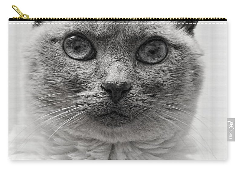 Siamese Cat Carry-all Pouch featuring the photograph Black And White Siamese Cat by Richard Cheski