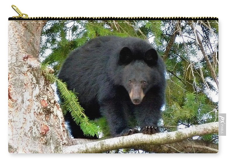 Black Bear 2 Carry-all Pouch featuring the photograph Black Bear 2 by Will Borden