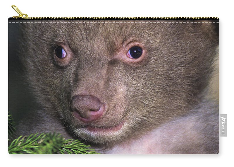 Black Bear Carry-all Pouch featuring the photograph Black Bear Cub Portrait Wildlife Rescue by Dave Welling