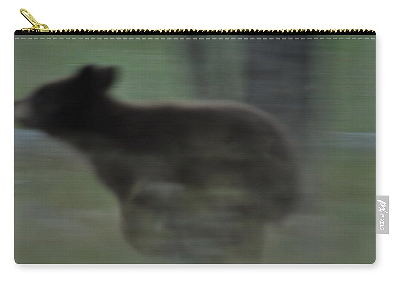 Black Bear Carry-all Pouch featuring the photograph Black Bear Cub Running by Frank Madia