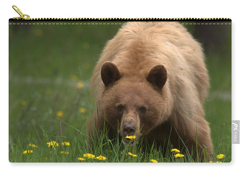 Bear Carry-all Pouch featuring the photograph Black Bear by Frank Madia