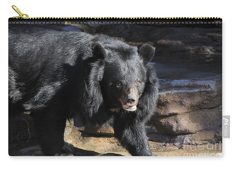 Bear Carry-all Pouch featuring the photograph Black Bear by Tonya Hance