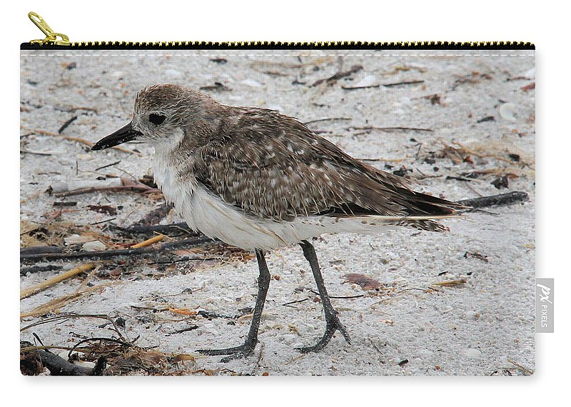 Black-bellied Plover Carry-all Pouch featuring the photograph Black-bellied Plover by Doris Potter