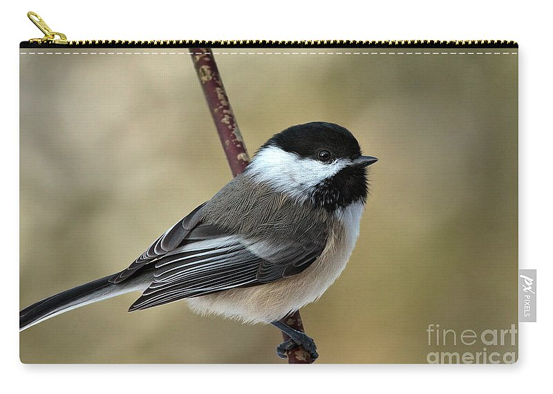 Chickadee Carry-all Pouch featuring the photograph Black Capped Chickadee by Rick Mousseau