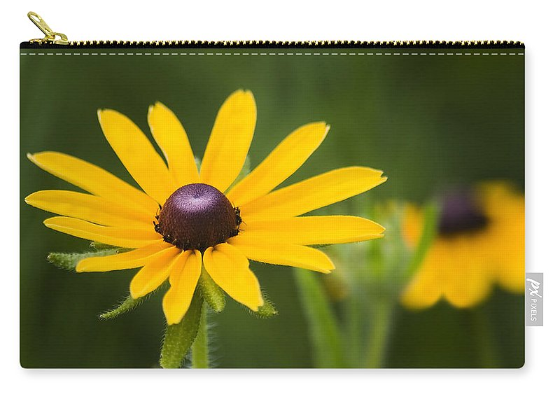 3scape Photos Carry-all Pouch featuring the photograph Black Eyed Susan by Adam Romanowicz