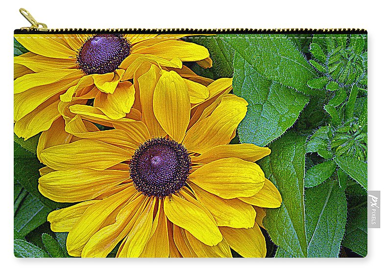 Black-eyed Susan Carry-all Pouch featuring the photograph Black-eyed Susan by Tikvah's Hope