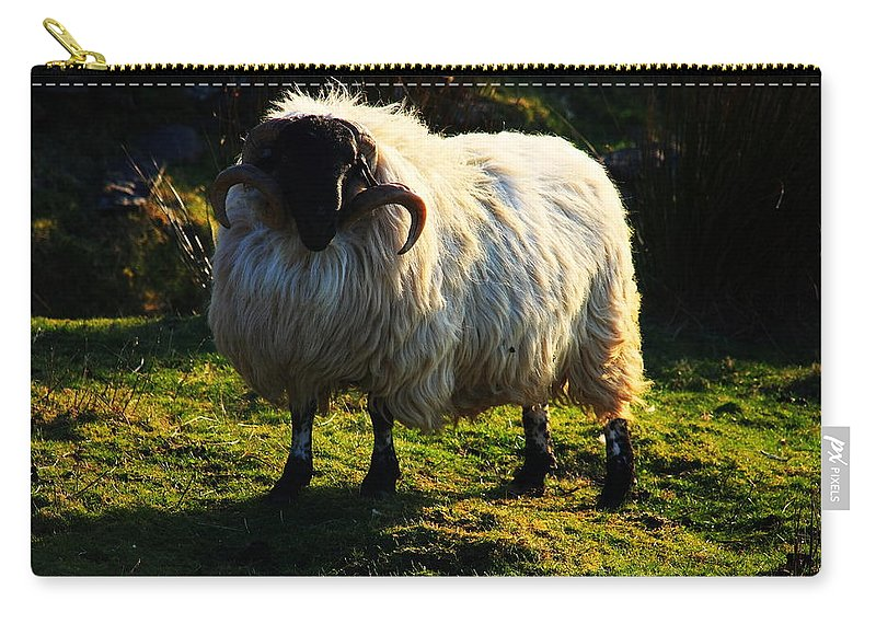 Ireland Carry-all Pouch featuring the photograph Black Faced Mountain Sheep by Aidan Moran