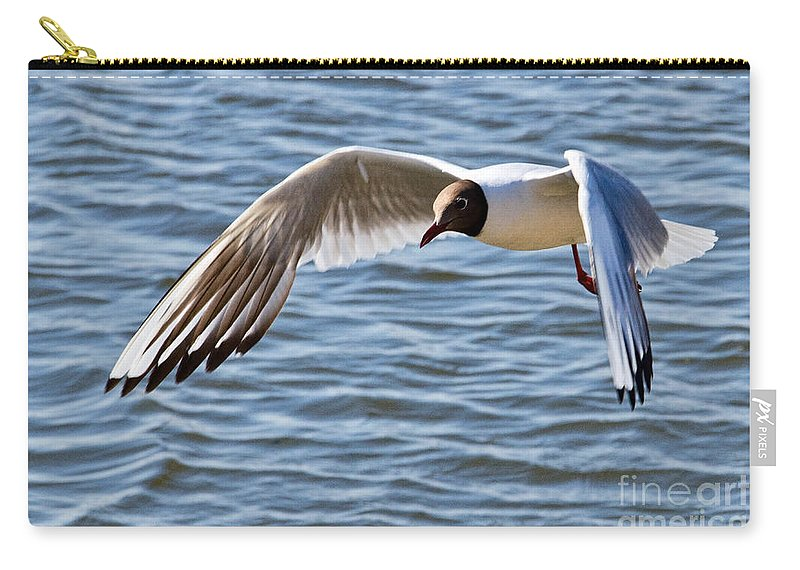 Black-headed Gull Carry-all Pouch featuring the photograph Black-headed Gull by Susie Peek