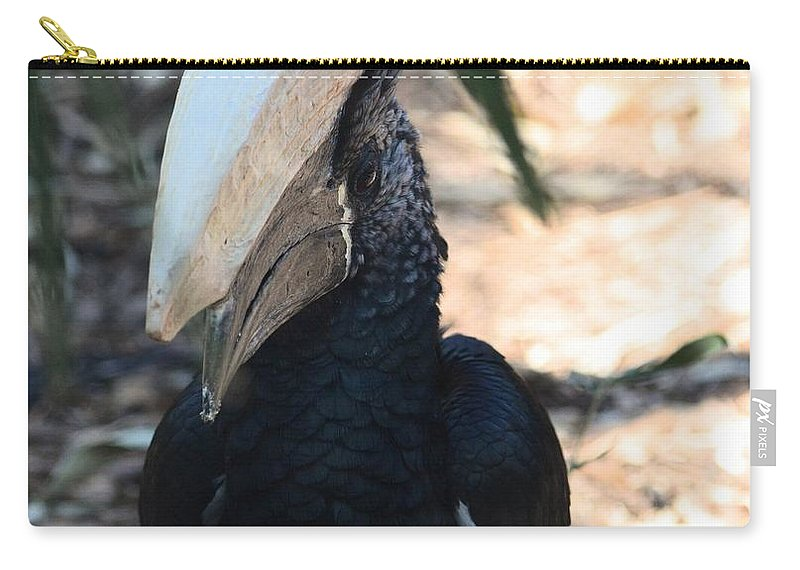 Black Hornbill Carry-all Pouch featuring the photograph Black Hornbill by Maria Urso