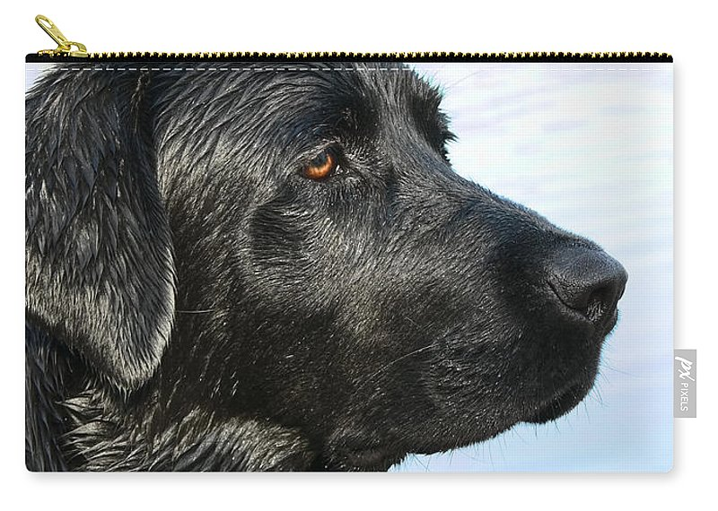 Labrador Retriever Carry-all Pouch featuring the photograph Black Labrador Retriever After The Swim by Jennie Marie Schell