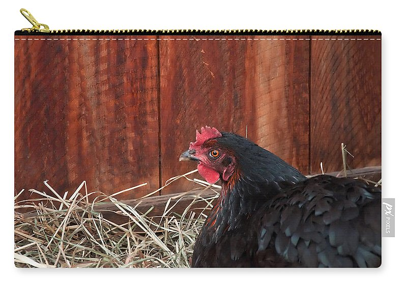 Chicken Carry-all Pouch featuring the photograph Black Laying Hen On Nest Art Prints by Valerie Garner