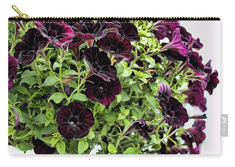 Purple Petunia Carry-all Pouch featuring the photograph Black Magic by Sylvia Thornton