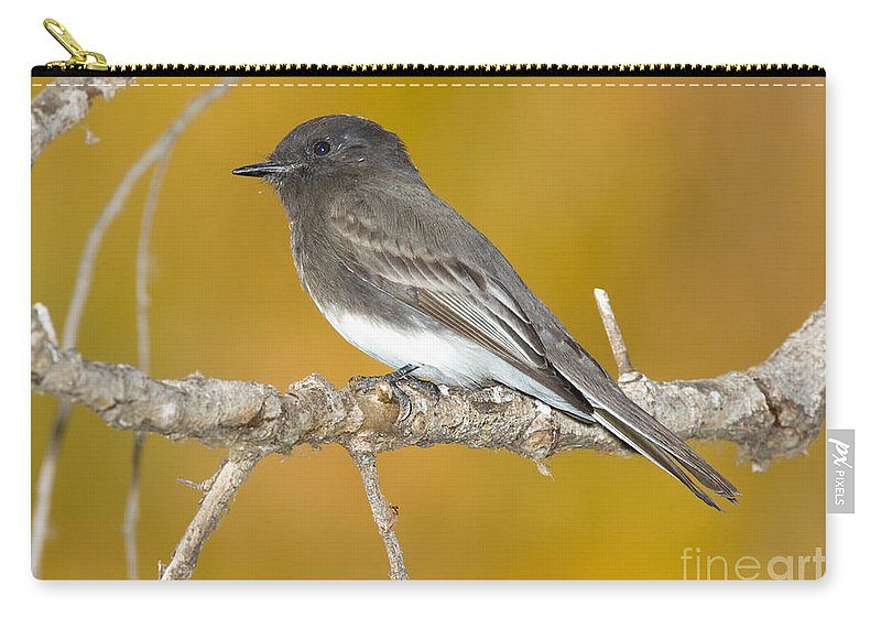 Fauna Carry-all Pouch featuring the photograph Black Phoebe Sayornis Nigricans by Anthony Mercieca