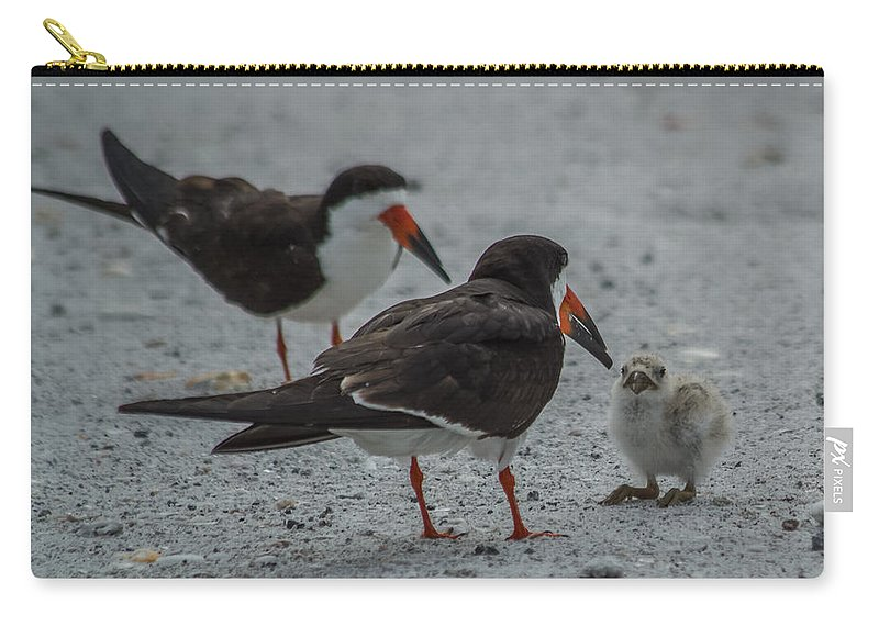 Florida Carry-all Pouch featuring the photograph Black Skimmers by Jane Luxton