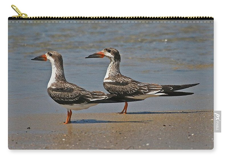 Black Skimmers On The Beach Carry-all Pouch featuring the photograph Black Skimmers On The Beach by Tom Janca
