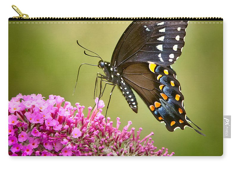 Butterfly Carry-all Pouch featuring the photograph Black Swallowtail by Bill Wakeley