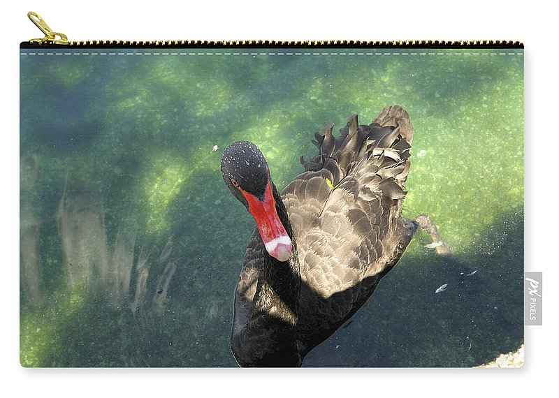 Cygnus Atratus Carry-all Pouch featuring the photograph Black Swan 3 by Csaba Friss