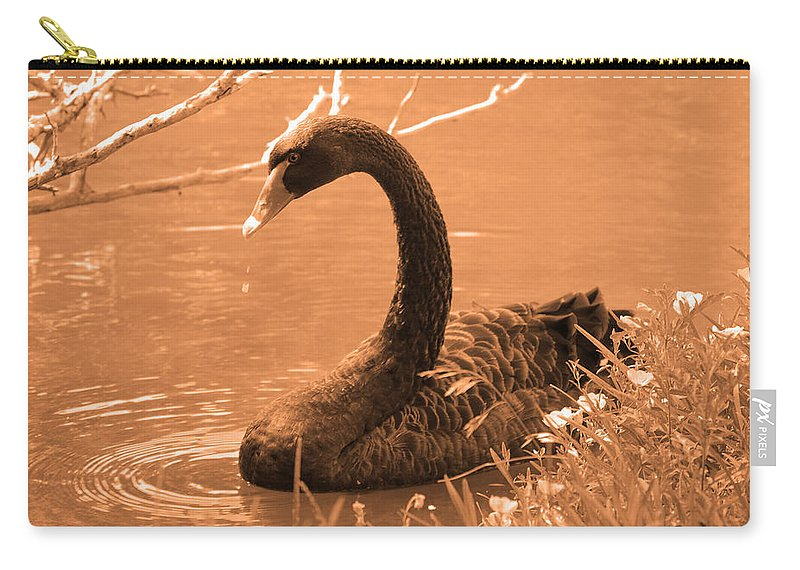 Bird Carry-all Pouch featuring the photograph Black Swan by Leticia Latocki