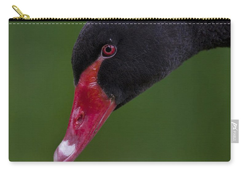 Swan Carry-all Pouch featuring the photograph Black Swan Series - 3 by Heiko Koehrer-Wagner
