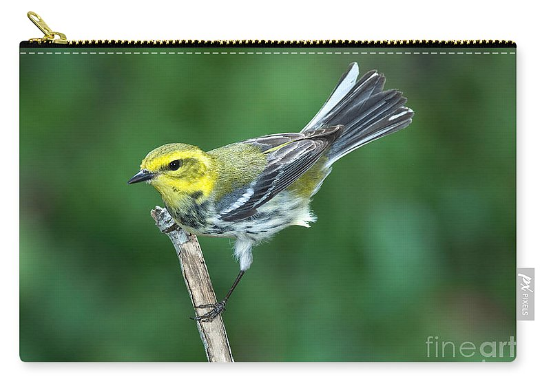 Fauna Carry-all Pouch featuring the photograph Black-throated Green Warbler, Female by Anthony Mercieca