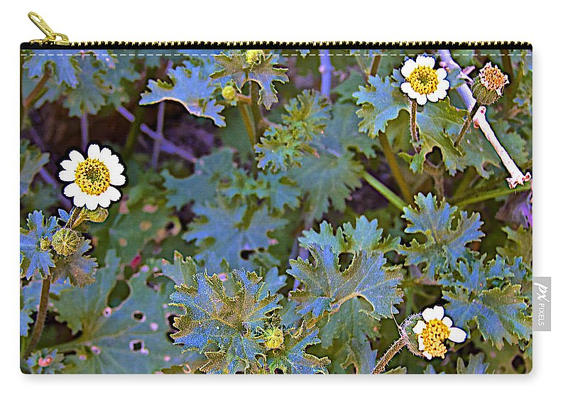 White Wooly Daisies On Borrego Palm Canyon Trail In Anza-borrego Desert State Park Carry-all Pouch featuring the photograph White Wooly Daisies On Borrego Palm Canyon Trail In Anza-borrego Desert State Park-ca by Ruth Hager