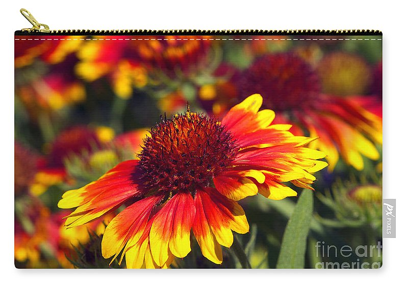 Blanket Flower Carry-all Pouch featuring the photograph Blanket Flower by Sharon Talson