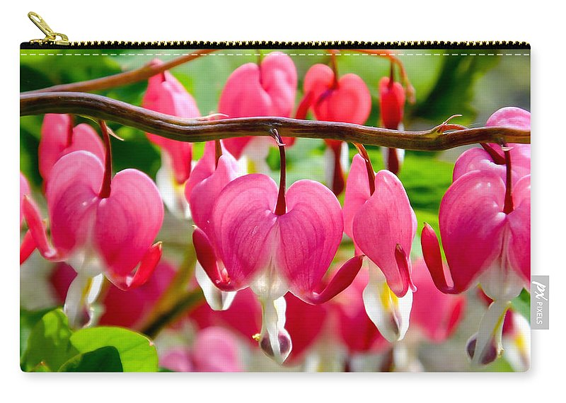 Artoffoxvox Carry-all Pouch featuring the photograph Bleeding Heart Flowers by Kristen Fox