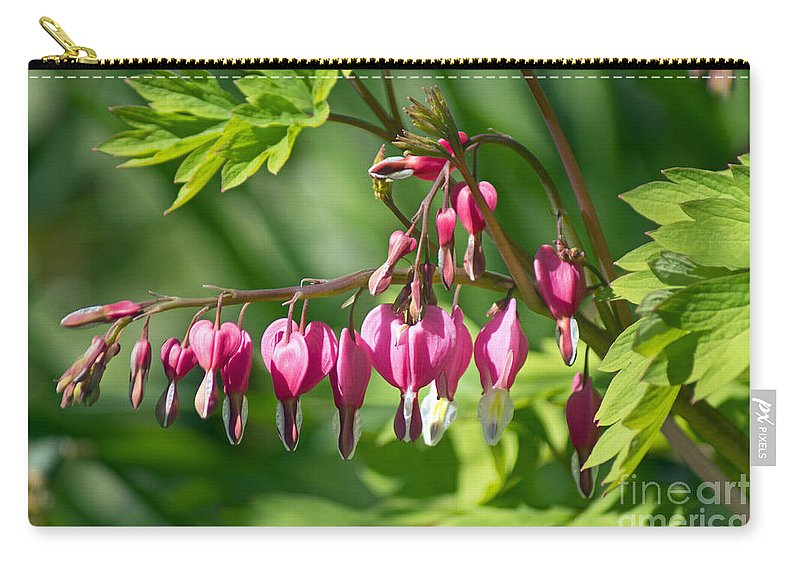 Flower Carry-all Pouch featuring the photograph Bleeding Heart by Joe Geraci