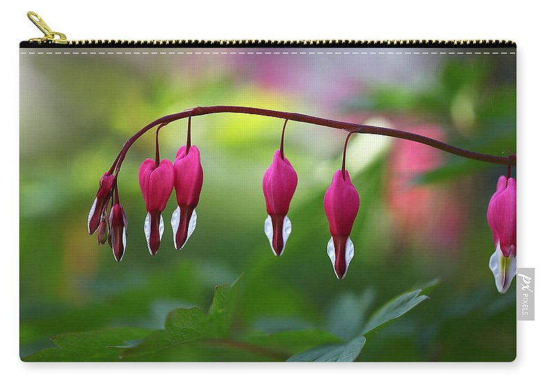 Flowers Carry-all Pouch featuring the photograph Bleeding Hearts by Annie Snel