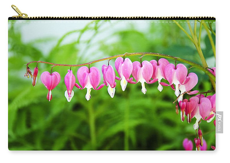 Bleeding Hearts Carry-all Pouch featuring the photograph Bleeding Hearts by Donna Doherty