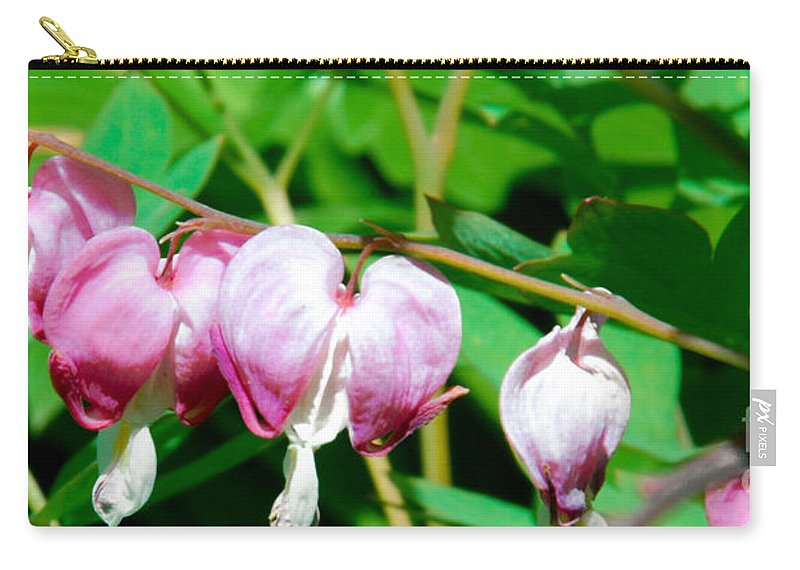 Bleeding Heart Flowers Carry-all Pouch featuring the photograph Bleeding Hearts In A Row by Optical Playground By MP Ray