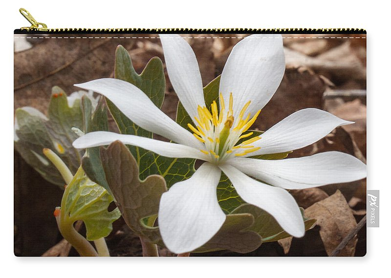 Blood Carry-all Pouch featuring the photograph Blood Root 1 by Douglas Barnett