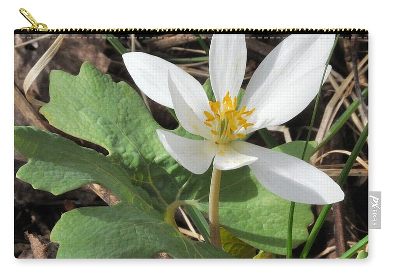 Bloodroot Carry-all Pouch featuring the photograph Bloodroot by Valerie Kirkwood