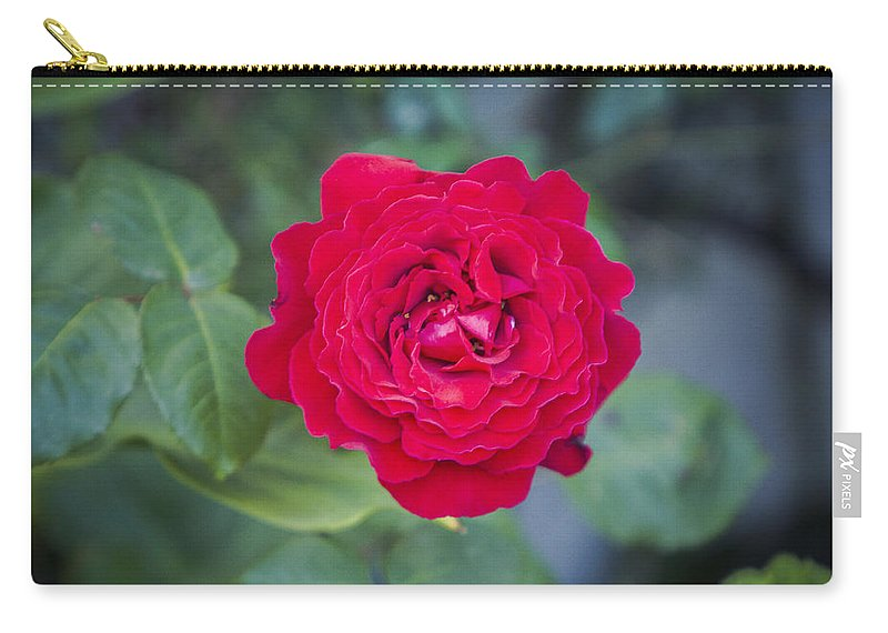 Rose Photographs Carry-all Pouch featuring the photograph Blossoming Rose by Paulina Fadrowska