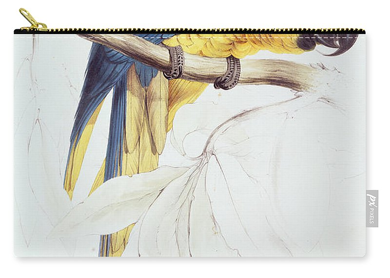 Parrot Carry-all Pouch featuring the painting Blue And Yellow Macaw by Edward Lear