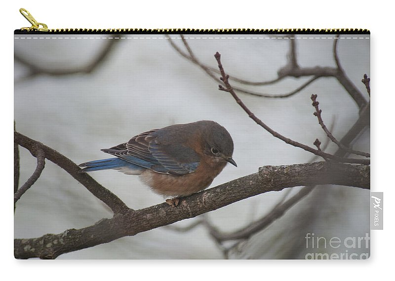 Blue Bird Carry-all Pouch featuring the photograph Blue Bird 201301 by David Arment