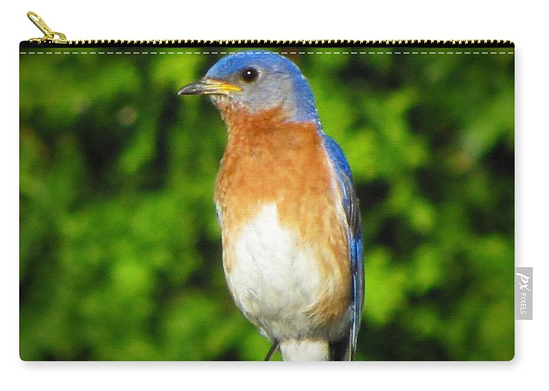 Blue Bird Carry-all Pouch featuring the photograph Blue Bird by David Dehner