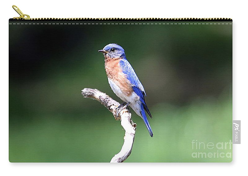 Blue Bird Carry-all Pouch featuring the photograph Blue Bird by Elizabeth Winter