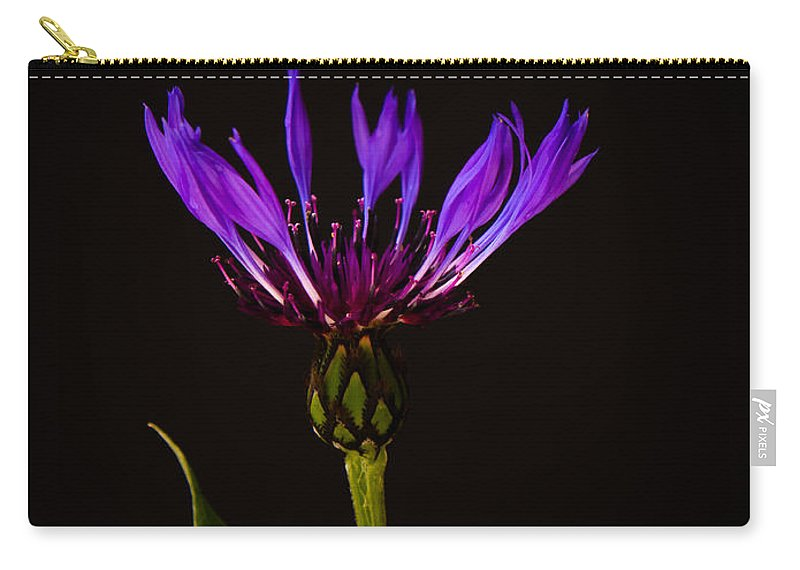 Asteraceae Carry-all Pouch featuring the photograph Blue Cornflower by Mark Llewellyn