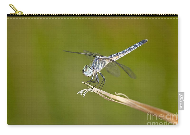 Dragonfly Carry-all Pouch featuring the photograph Blue Dasher On The Edge by Bryan Keil