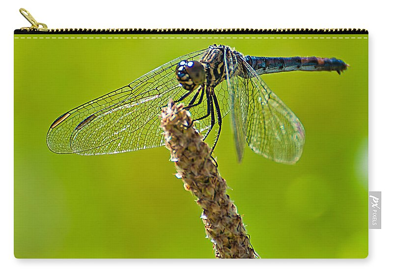 Blue Carry-all Pouch featuring the photograph Blue Dragonfly 6 by Photos By Cassandra